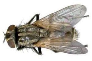 Como se livrar dos mosquitos em sua casa Casa e Jardim Controle de Pragas  mosquitos moscas